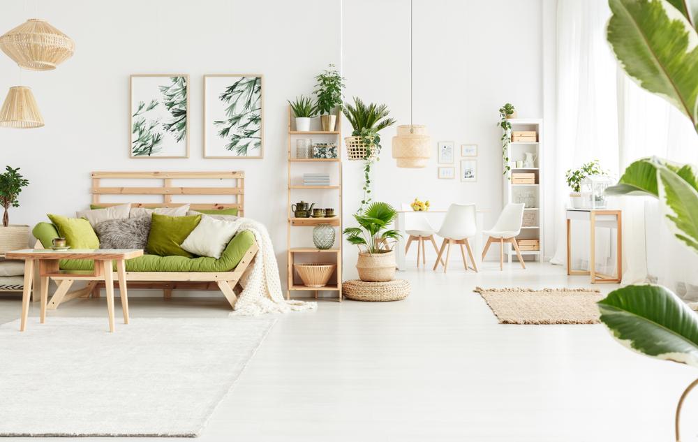 plantas en tu hogar
