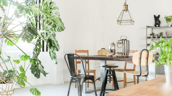 5 ideas para decorar tu casa con plantas