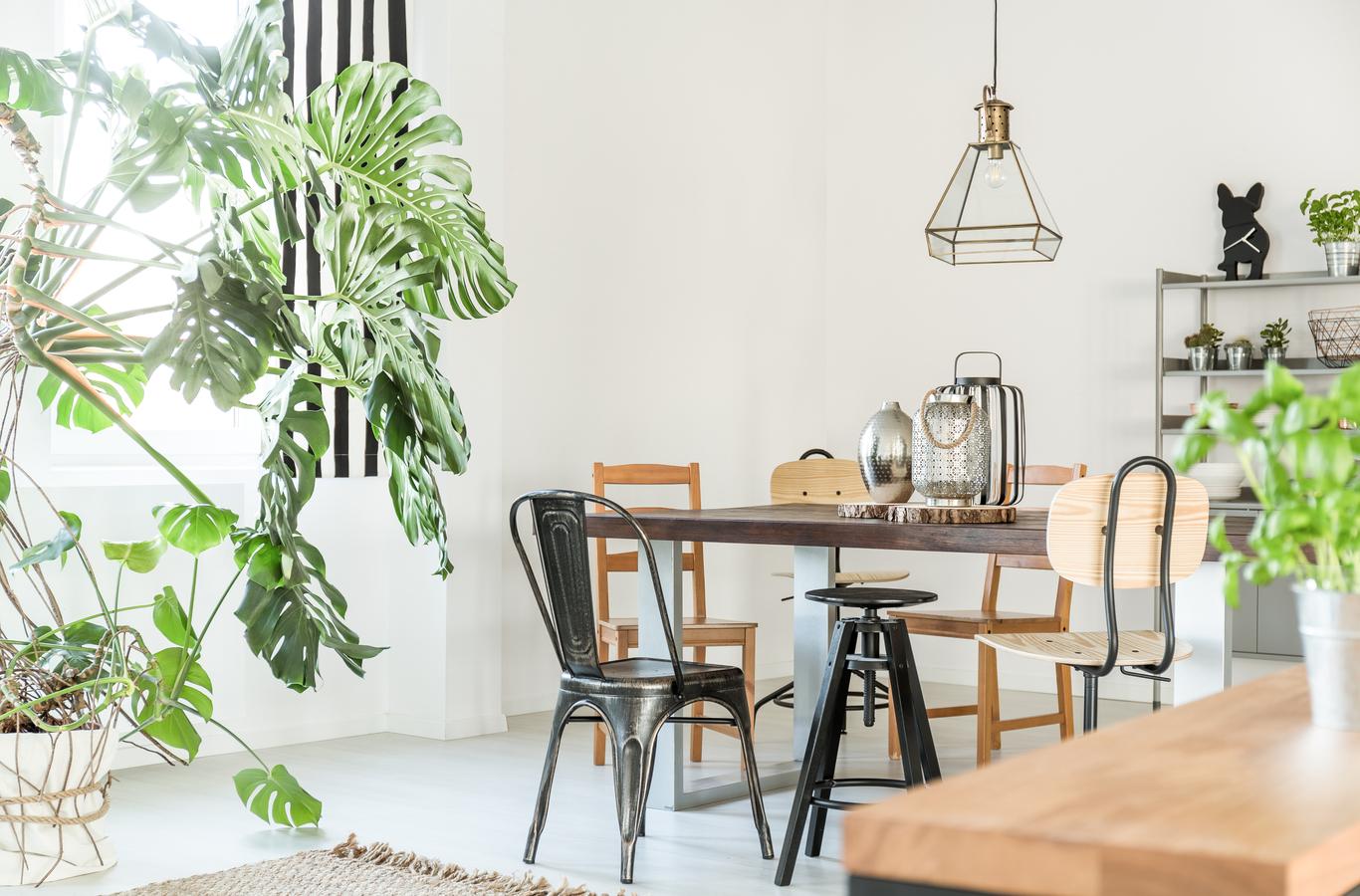 5 ideas para decorar tu casa con plantas
