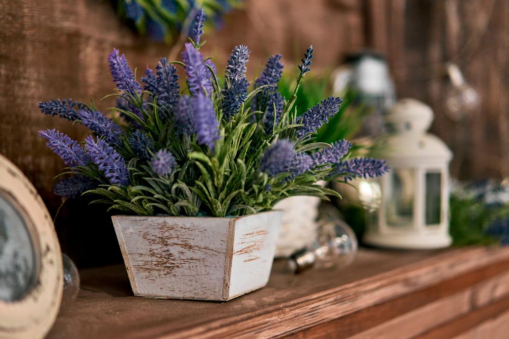 lavanda en habitación ideas para decorar tu casa con plantas