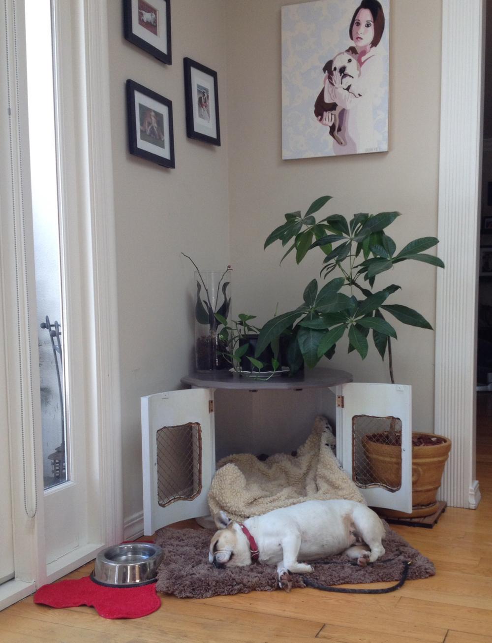 perrito acostado fuera de su nueva cama