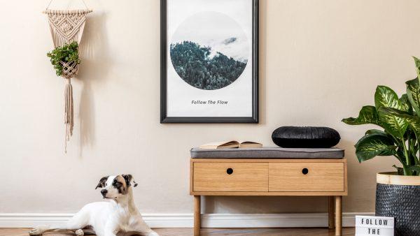 Perro en espacio de la casa