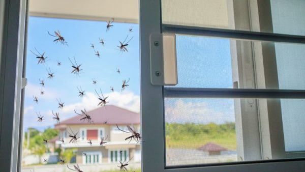 prevención del dengue en casa