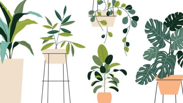 nuevas-tendencias-en-plantas-de-interior