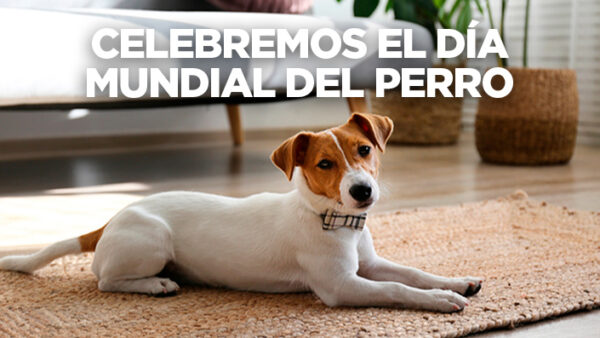 Las mejores ciudades de Colombia para vivir con tu perro